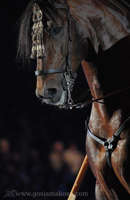 andalusian horse face horses saddles spanish lusitano tack