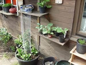 Erdbeeren Wann Pflanzen : klettererdbeeren rankende erdbeeren ~ Watch28wear.com Haus und Dekorationen