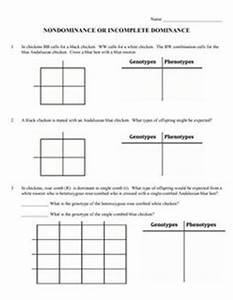 Genetics Unit Packet  Traits  Probability  Punnett Squares
