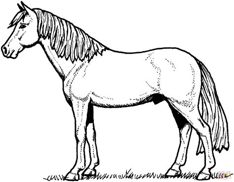 stallion horse coloring page  printable coloring pages