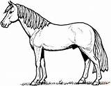 Horse Coloring Pages Stallion sketch template