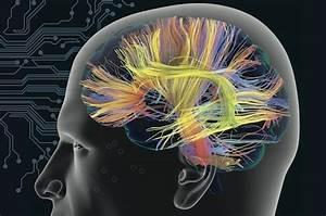Brain Wiring Test