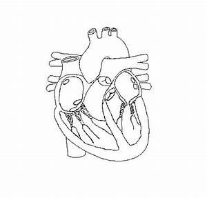 Free Blank Heart Diagram  Download Free Clip Art  Free