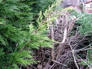 Wann Müssen Apfelbäume Geschnitten Werden : wann werden hecken geschnitten der ~ Lizthompson.info Haus und Dekorationen