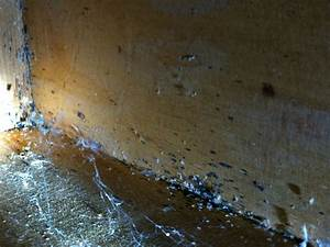 bed bug dirt under dresser thrasher termite pest control With do bed bugs come from dirt
