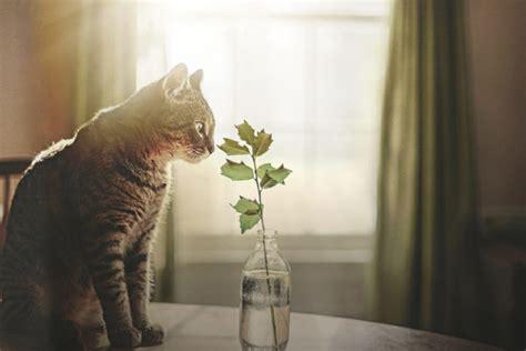 amazing life photography ideas enhanced