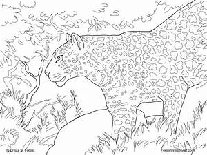 Free Rainforest Coloring Pages - Free Coloring Pages