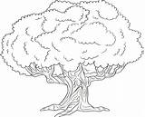 Tree Coloring Pages Cherry Trees Getcolorings Printable Sheets Getdrawings sketch template