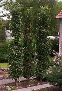 saulenobst im garten saulenobst pinterest garten With französischer balkon mit apfelbaum für kleinen garten