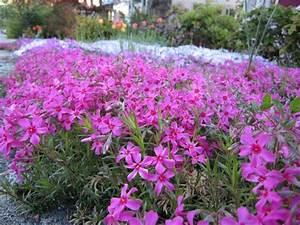 Jardiniere Fleurie Plein Soleil : fleurs exterieur plein soleil ~ Melissatoandfro.com Idées de Décoration