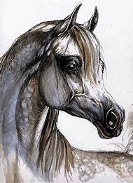 Arabian Horse Head Paintings