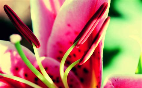 FREE 20+ Tumblr Flower Backgrounds in PSD | AI