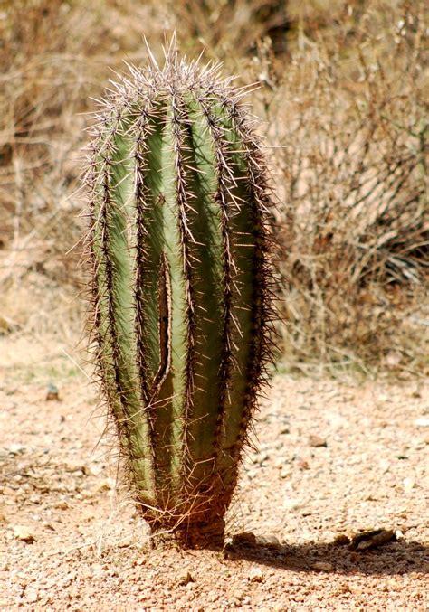 desert plants edupic cactus and desert plant images