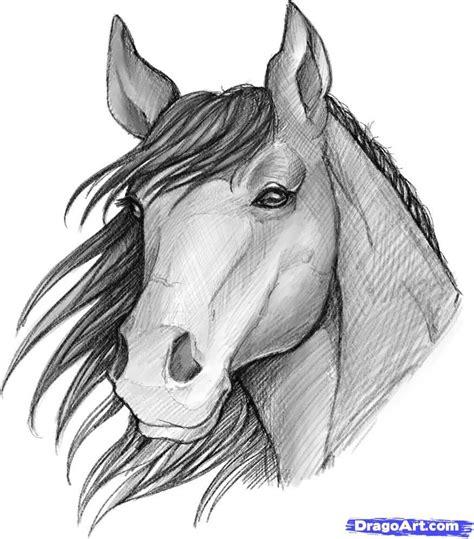 image   sketched anime   sketch  horse