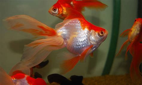 beautiful fishes      aquarium