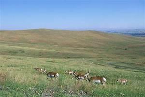 Grasslands Natureworks