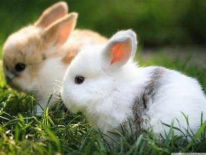 Bunnies Background Desktop Wallpapers 4k