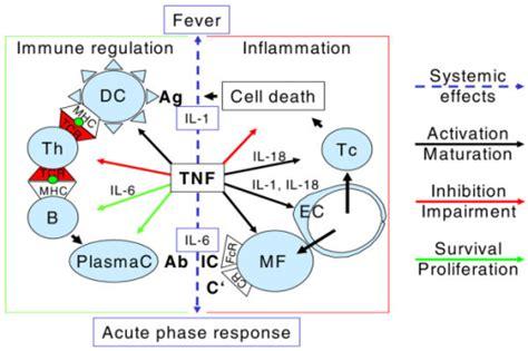 Relevant Effects Of Tumor Necrosis Factor (tnf). Tnf Ac