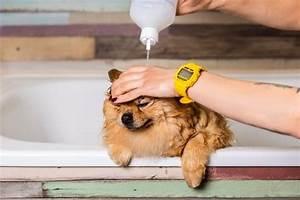 Flea And Tick Product Comparison Chart Top 10 Best Dog Flea Shampoos Best Shampoos For Flea