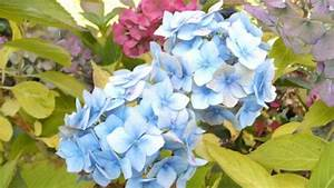 Hortensien überwintern Im Keller : berwinterung von pflanzen im dunklen keller garage ~ Lizthompson.info Haus und Dekorationen