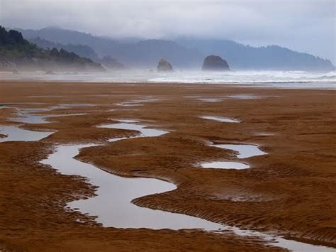 tide pools cannon beach oregon oregon pinterest