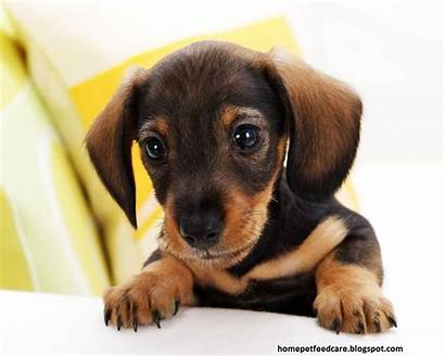 Dog Breed Choose Breeds Dogs Puppy Pets