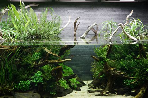 Amano Aquascaping by The Passing Of Aquascaping Legend Takashi Amano