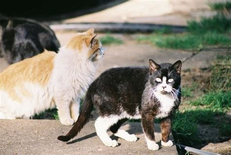 How To Trap And Rescue Feral Cats  The Feral Life Cat Blog