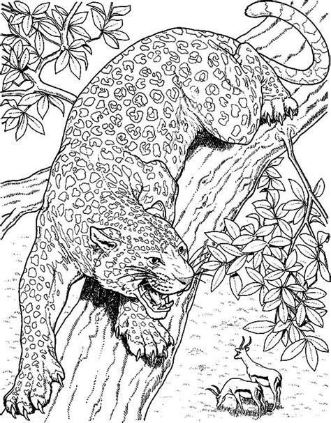 Coloring Jaguar by Jaguar Jaguar Eyeing On Mule Deer Coloring Pages Jaguar