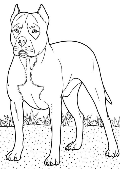 boxer dog guarding  backyard coloring pages  place  color