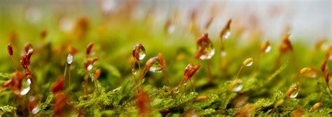 Sauliusfoto: Pavasaris nosį kutena