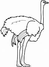 Ostrich Coloring Clipart Feet Strong Colors Clipartmag Colorluna sketch template