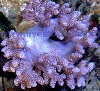 coral identification  marine aquarium soft