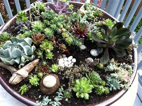 succulent dish garden dish garden succulent plants home outdoor decoration