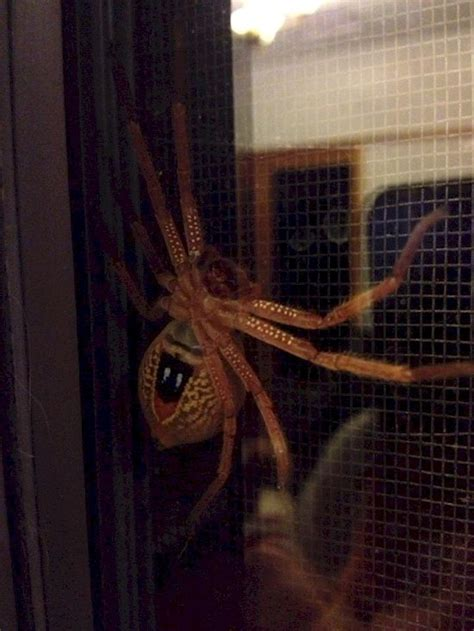 australia scary things australie pays picdump acid spider qui animals est reddit really hurry why its amazing porte animaux nope