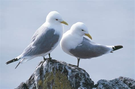 Sea Birds Secret Colony Location Policy!  Scitech The