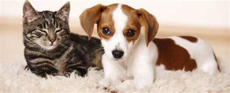 waschbär und katze hund