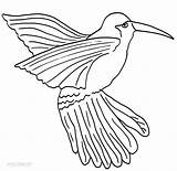 Hummingbird Coloring Printable Pages Cool2bkids Bird Template Humming Print Birds Printables Drawings Adult Getcolorings sketch template