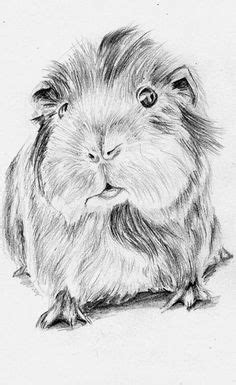 top   printable guinea pig coloring pages  guinea pigs pinterest guinea pigs