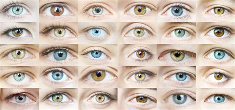 eye colors list eye color trivia vision source of hendersonville