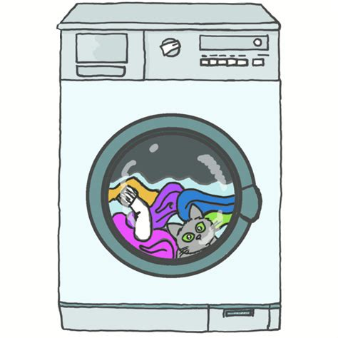 machine a laver qui pese le linge pause lave linge et lave chaton par la m 234 me occasion une pause s impose