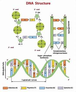 Start And Stop Codons