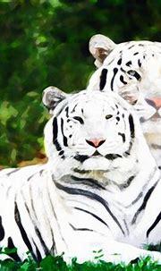 White Bengal Tigers Wallpaper | White Bengal Tigers ...
