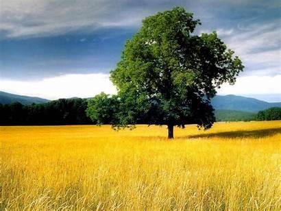 Tree Field Wallpapers Backgrounds