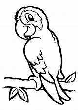 Parrot Coloring Branch Pages Print sketch template