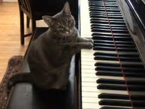 the piano cat who caused an sensation
