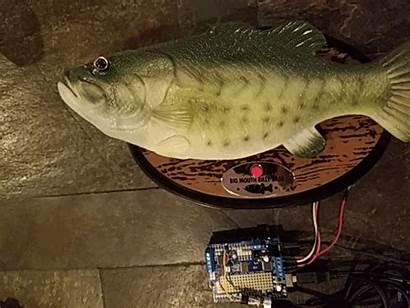 Bass Billy Alexa Integration Api Engineering Re
