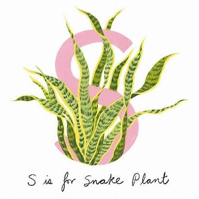 Common Houseplants Guide Plants Cactus Plant Nerve