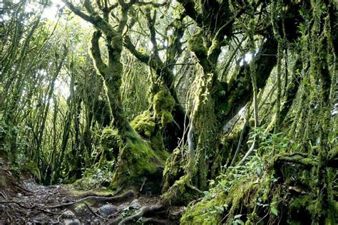 The Most Spectacular Forests In The World Slideshow