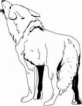 Kojot Colorear Kojote Inclinado Roca Pniu Drzewa Wile Onlinecoloringpages Drukuj Wyjący sketch template